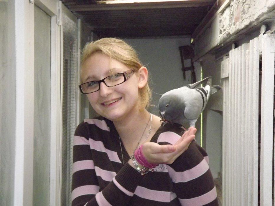 Mes débuts dans le monde des pigeons voyageurs
