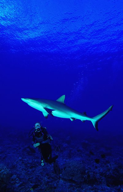 Plongée à Tahiti