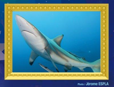 Réssultat du concours MISS OCEAN