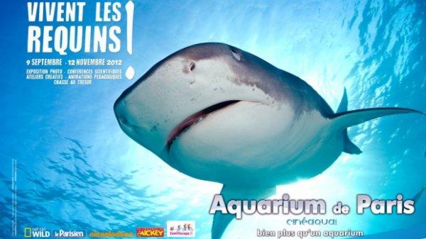 Vivent les requins