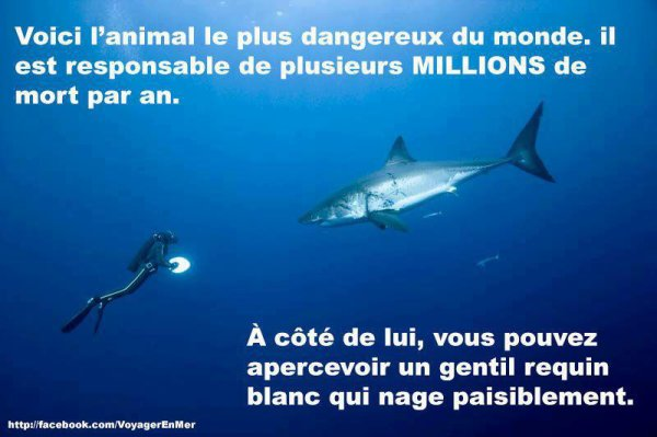 LE PARLEMENT EUROPEEN A VOTE EN FAVEUR DE L'INTERDICTION DU FINNING* DES REQUINS