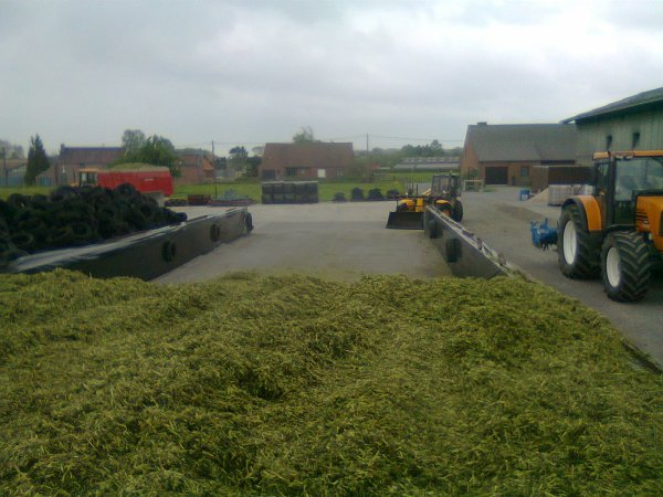 ensilage ray-grass 2012