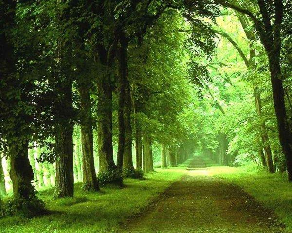 ➤ Woods