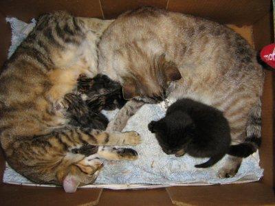 surprise+ebene+chats dora+dora