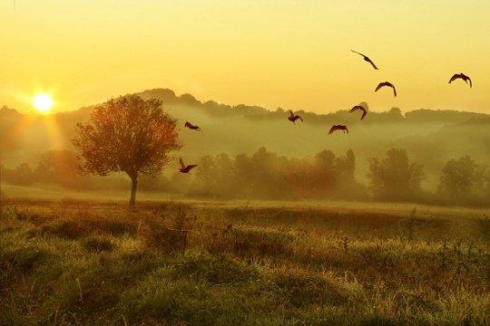 lever du jour... l'espoir d'une nouvelle belle journée...