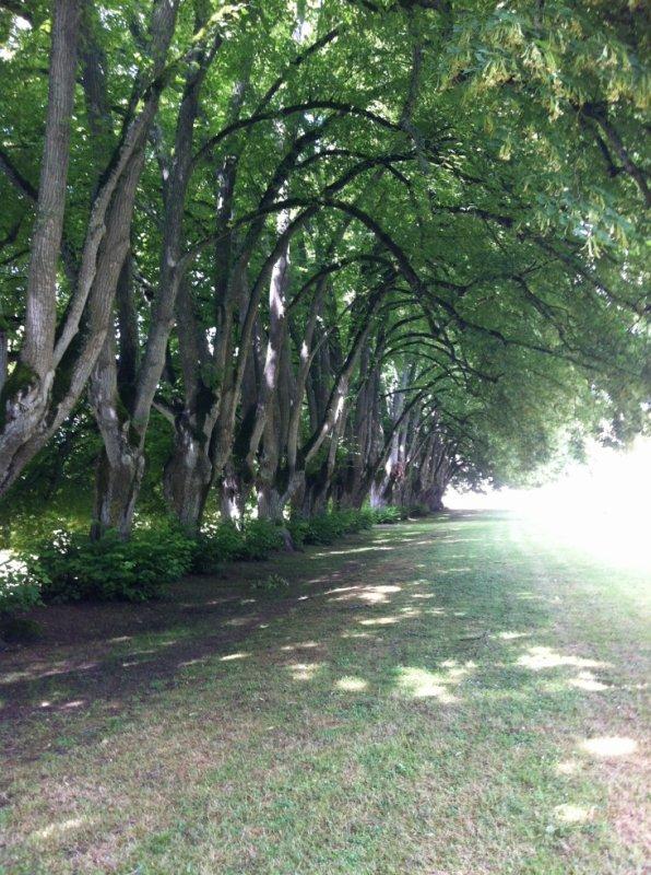 Allée de tilleuls à l'abbaye de Noirlac
