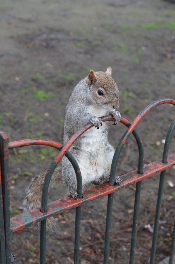 Un écureuil, c'est un rat qui a une bonne agence de RP.