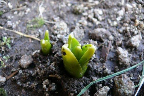 Revoir le printemps