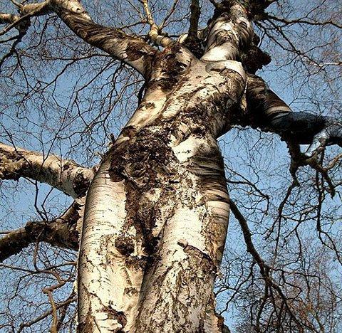 L'arbre de vie...
