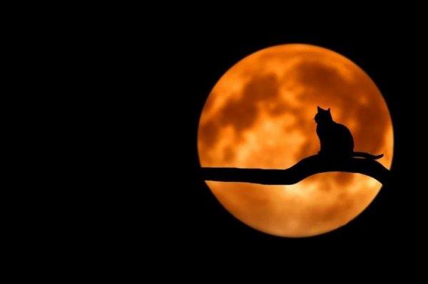 Ô Clair de Ma Lune