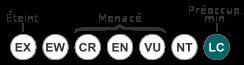 Le Chien Viverrin