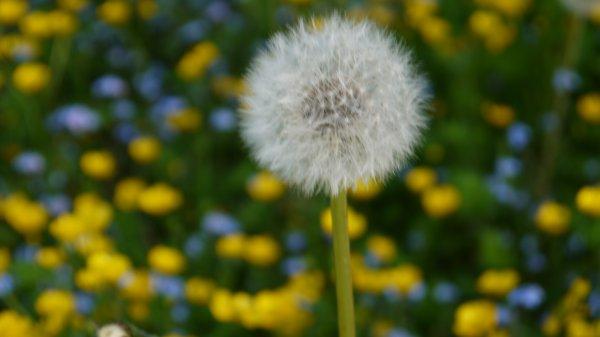 Make Wish... ;)
