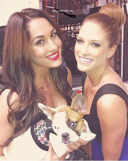 kelly kelly et brie bellas