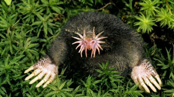 Les animaux les plus étranges du monde (2ème partie).