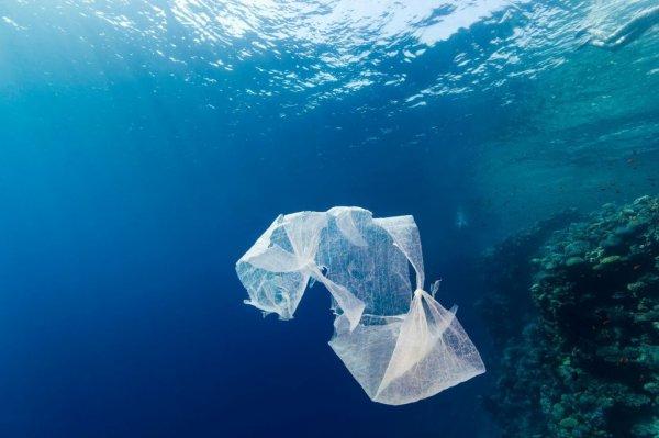 Plus de 5 milliards de déchets en plastique polluent les océans.