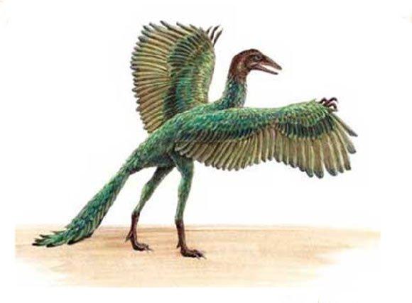 Un big-bang des oiseaux après l'extinction des dinosaures.