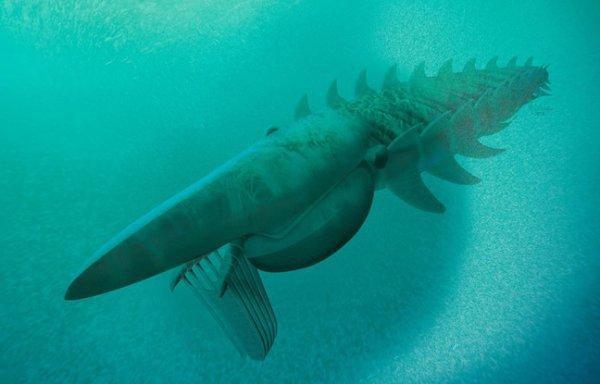 Découverte d'un monstre marin vivant il y a 480 millions d'années.