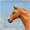ChestnutXTutos