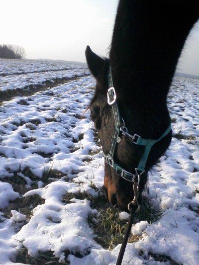Moi dans un champ ou l'herbe et trop bonne..!!!mais pa de trop en hiver