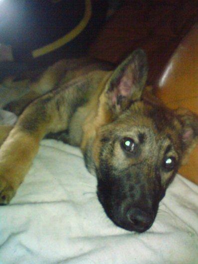Amour de chien : Falone des cascades de lusy