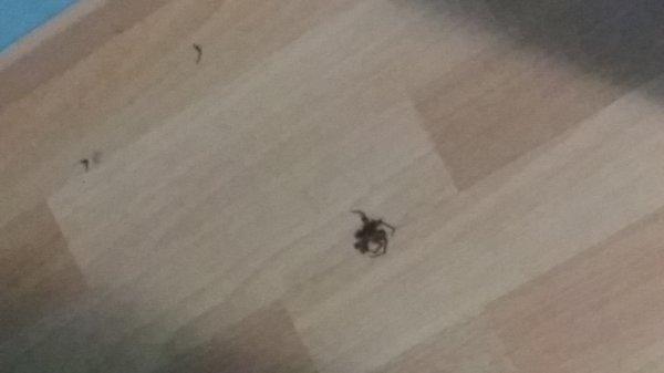 Je t'avais demander de partir madame l'araignée...