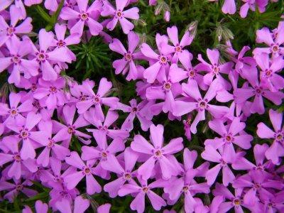 tres joli ces fleurs