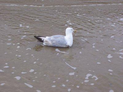les Oiseaux de la Mer