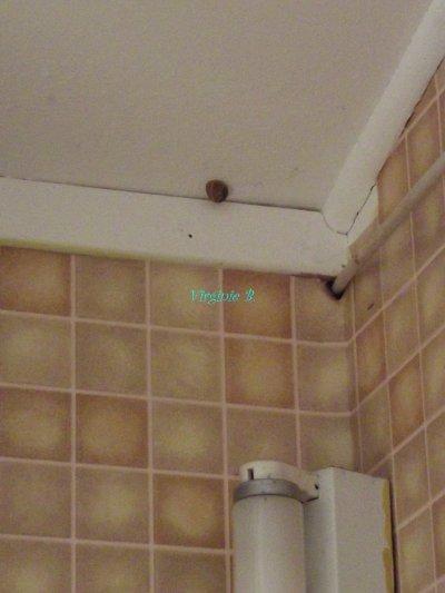 Petit Escargot sur plafond de la cuisine, Souvenir de vacances.