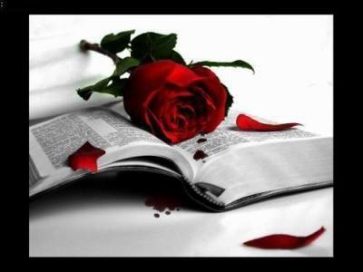 Une rose ♥