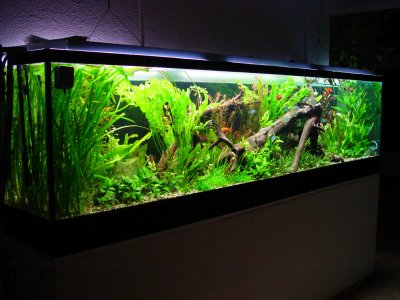 blog de aquarium d eau douce l 39 aquariophilie. Black Bedroom Furniture Sets. Home Design Ideas