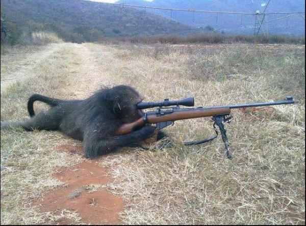 La pensée politiquement incorrecte du Bonobo.