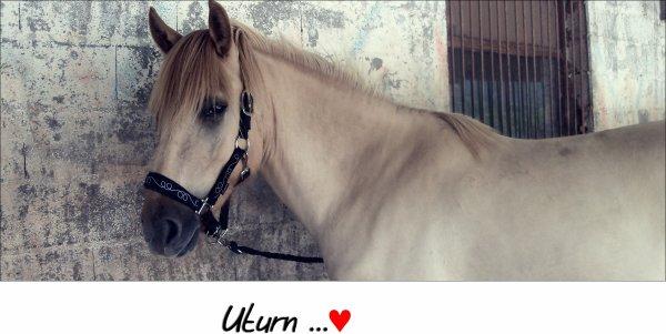 Uturn ... ♥