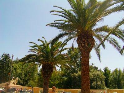 les palmiers!!!!