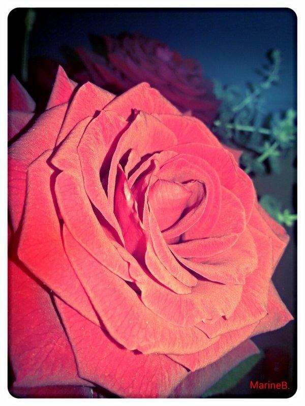 La rose a pour amies ses épines. #ProverbeAfghan