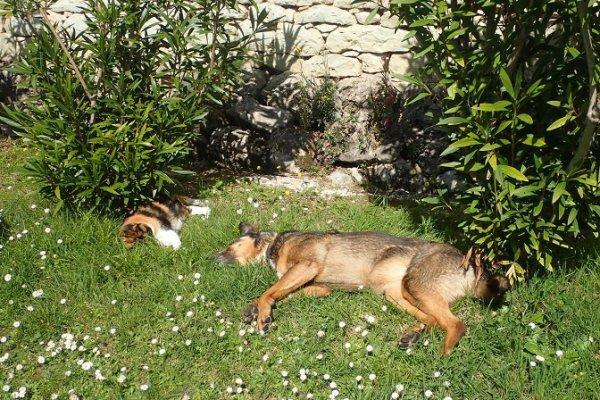 Ficelle et Gaïa profitent du soleil