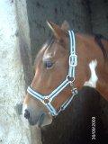 Photo de horse---love---06