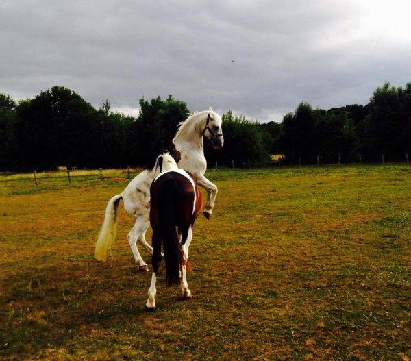Bientôt la rentrée Equestre