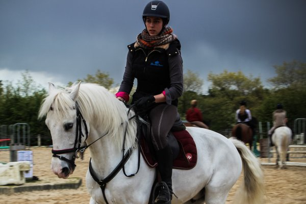 Progression en dressage