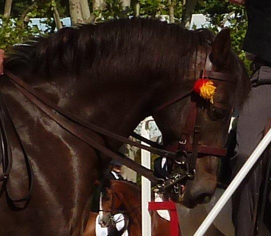 Cours de cheval des vacances !