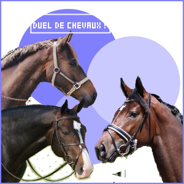 ¤ Duels de chevaux ¤