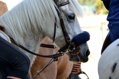 Une nouvelle cavalière pour Mignone  !  :p