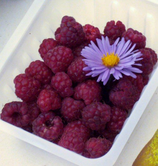 Mercredi journée cueillette de fruits et légumes les enfants sont ravis