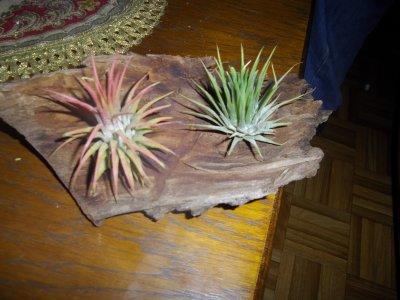 plante sans eau ni terre bienvenu sur mon blog de decoration. Black Bedroom Furniture Sets. Home Design Ideas