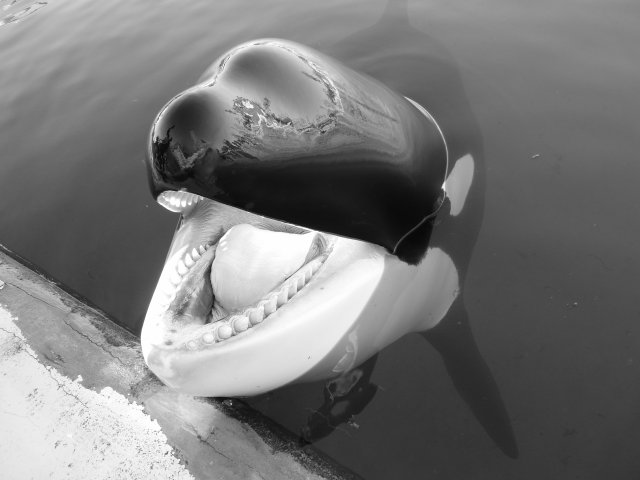Valentin et les orques du marineland