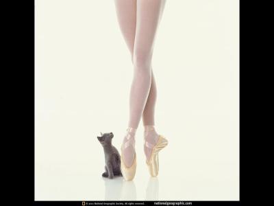 Fond D Écran Danse Classique la danse ma passion!
