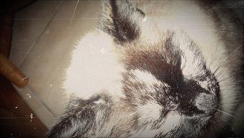愛の私の猫 ^v^