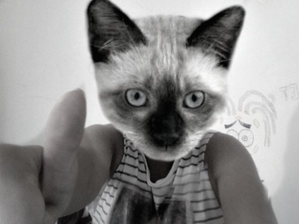 CatFace Powa