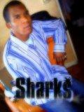 Photo de sharks07