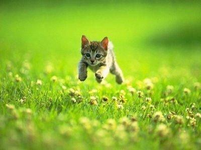 Les chatns j'adore