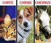 chiens-chevaux-chats